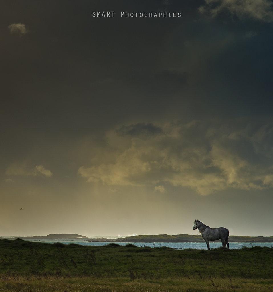 Horse in Connemara