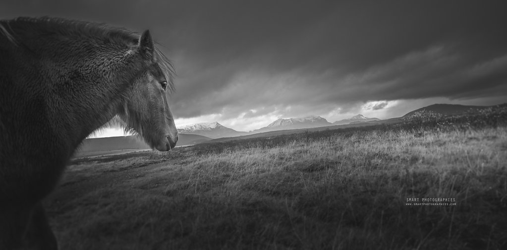 HORSE-ICELAND.jpg